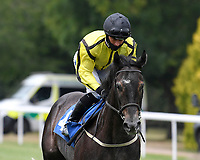 Pope Gregory ridden by Nicola Currie  goes down to the start of The Federation Of Bloodstock Agents Novice Stake s  during Horse Racing at Salisbury Racecourse on 13th August 2020
