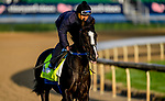 LOUISVILLE, KENTUCKY - APRIL 29: Long Range Toddy, trained by Steven Asmussen, exercises in preparation for the Kentucky Derby at Churchill Downs in Louisville, Kentucky on April 29, 2019. John Voorhees/Eclipse Sportswire/CSM