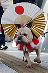 A dog is seen before the royal parade to mark the enthronement of Japanese Emperor Naruhito in Tokyo, Japan on Sunday, November 10, 2019. (Photo by AFLO)