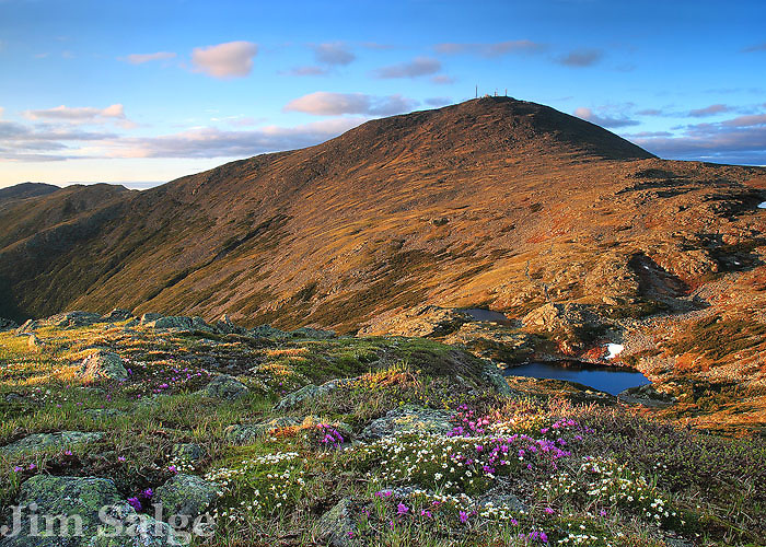 Mount Washington is an arctic island in the sky, with wildflowers that are extremely rare in New England.  After enjoying an afternoon above treeline, I made my way to Mount Monroe for sunset.  From there, I found a perfect patch of tundra in full bloom as the last light hit the upper slopes of Mount Washington.