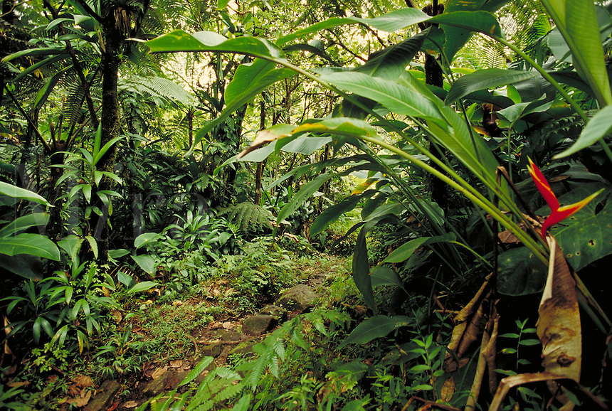 Trail to Boeri Lake, Morne Triois Pitons National Park, island of Dominica , West Indies. Morne Triois Pitons Nat. Pk., Dominica West Indies.
