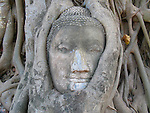 Stone Buddha being strangled by tree roots, Ayatthaya, Thailand