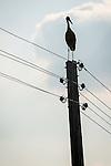 Stork sits on top of power pole, Mlekarovo, Bulgaria