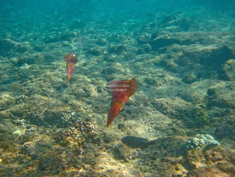 Snorkeling at Black Rock on Ka'anapali Beach, Maui