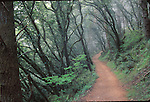 forest on sky trail at Point Reyes