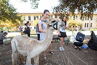 Harvest Fest in the Academic Quad on Thursday, Oct. 24, 2019. Students, faculty and staff could pet animals, pick up a plant, get free food, drinks and more, and also learn about Food Justice Month and Empowerment Week.<br /> (Photo by Marc Campos, Occidental College Photographer)