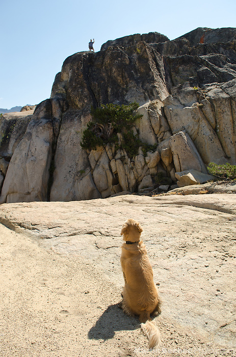 A dog (golden retriever) waiting patiently while his owner explores a granite ridge, Sierra Nevada, Toiyabe National Forest, California