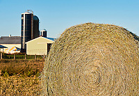 Round hay bale on farm field.