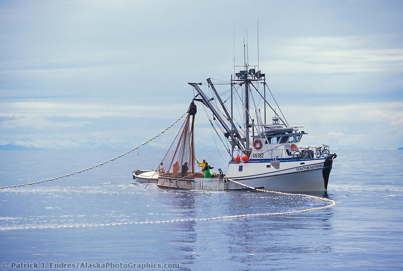 Purse seine commercial fishing for Seine net fishing