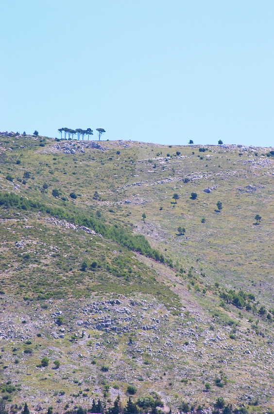 Hilltop hill mountain top, a few lone trees in a line on the crest edge, dry stony slope. Dubrovnik, new city. Dalmatian Coast, Croatia, Europe.