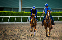 HALLANDALE BEACH, FL - JANUARY 25: Gun Runner trains for Pegasus World Cup Invitational at Gulfstream Park Race Track on January 25, 2018 in Hallandale Beach, Florida. (Photo by Alex Evers/Eclipse Sportswire/Breeders Cup)