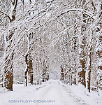 Snowy tree-lined road winter scene