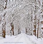 Snowy tree-lined road winter scene