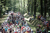 peloton going through the forest<br /> <br /> <br /> stage 10: Tarbes - La Pierre-Saint-Martin (167km)<br /> 2015 Tour de France