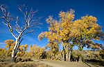 Fall colors surround the trail through Riverview Park in Carson City, Nev., on Oct. 21, 2009..Photo by Cathleen Allison..