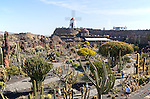 Cactus plants and windmill Jardin de Cactus designed by César Manrique, Guatiza. Lanzarote, Canary Islands, Spain