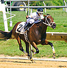 Messer Misfit winning at Delaware Park on 8/29/16