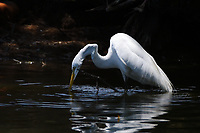 A bird cools off with a drink of water from the pond near the fairway on 8 during round 3 of the 2019 US Women's Open, Charleston Country Club, Charleston, South Carolina,  USA. 6/1/2019.<br /> Picture: Golffile | Ken Murray<br /> <br /> All photo usage must carry mandatory copyright credit (© Golffile | Ken Murray)
