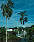 Palm trees frame the San Martin Waterfall at left with Mbigua Falls at right in Iguazu Falls National Park in Argentina.   A UNESCO World Heritage Site.