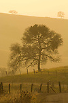 Rural Amador County, Calif., hills and oaks in the afternoon haze during winter