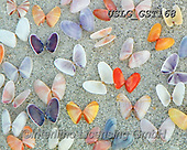 MODERN, MODERNO, paintings+++++GST_Butterfly Shells,USLGGST168,#N#, EVERYDAY ,collages,puzzle,puzzles ,photos ,Graffitees
