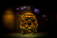 SAO RAIMUNDO NONATO, BRAZIL - FEBRUARY 01, 2014: A human skull, The Zuzu skull,  estimated to be 9,920 years old is displayed at the Fundação Museu do Homem Americano displaying artefacts from the Serra de Capivara National Park on February 01, 2014 in Sao Raimundo Nonato, Piaui province, in Northern Eastern Brazil.  <br /> <br /> <br /> Daniel Berehulak for The New York Times
