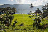 Rice paddy fields at Lake Toba (Danau Toba), North Sumatra, Indonesia
