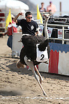 Brade competes in an emu race at the 56th annual International Camel &amp; Ostrich Races in Virginia City, Nev. on Friday, Sept. 11, 2015. <br /> Photo by Cathleen Allison