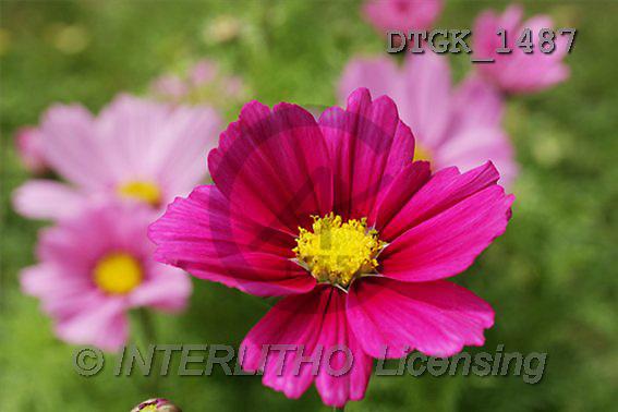 Gisela, FLOWERS, photos(DTGK1487,#F#) Blumen, flores, retrato