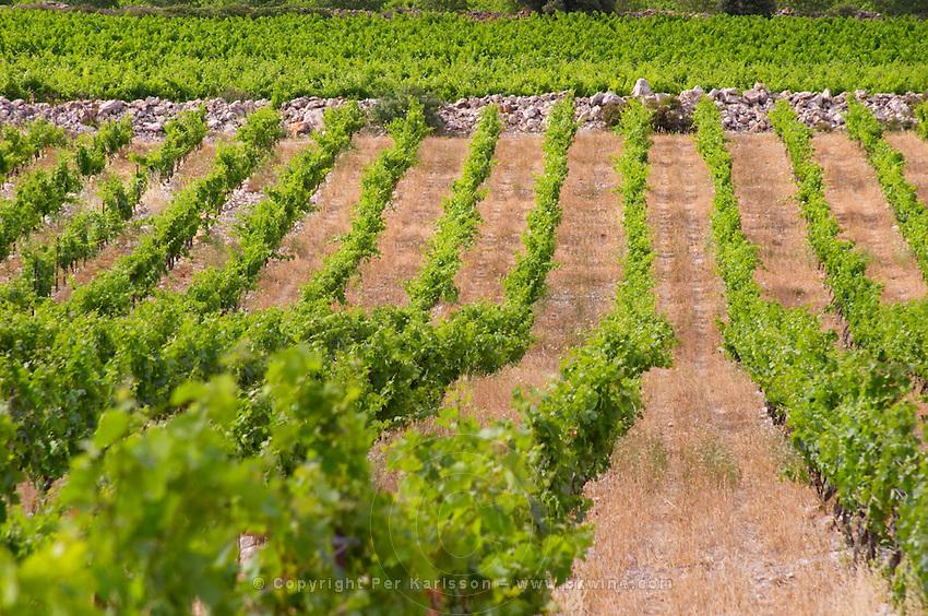 Domaine des Grecaux in St Jean de Fos. Montpeyroux. Languedoc. Calcareous limestone plateau called rendzine. France. Europe. Vineyard. Soil with stones rocks. Calcareous limestone.