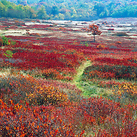 Scenic autumn landscape of the Big Meadow in the Blue Ridge Mountans in Shenandoah National Park. Luray, Virginia.