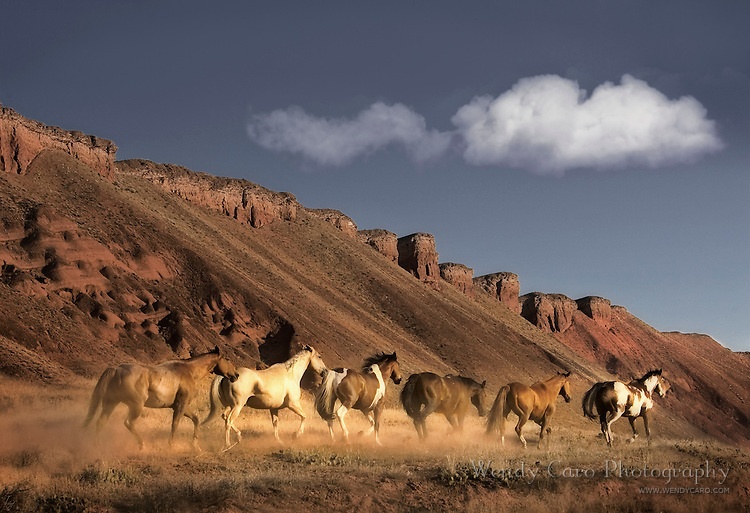 Small band of horses headed home to pasture, late afternoon, Red Rocks, Big HBorn Mountains, Wyoming.