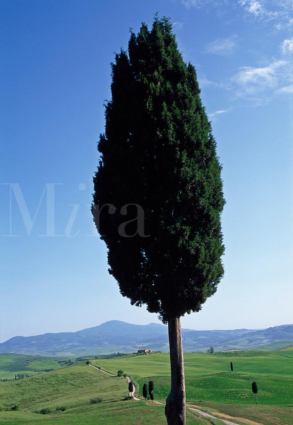 Italy,Pienza,Tuscany, cypress tree and Tuscan landscape