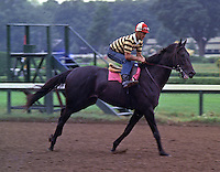 Swale, by Seattle Slew - beloved Claiborne Farm dual-classic winner (Kentucky Derby, Belmont Stakes) - at Saratoga as a two-year-old, 1983