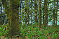 Forest near Alouette Lake<br /> Golden Ears Provincial Park<br /> British Columbia<br /> Canada