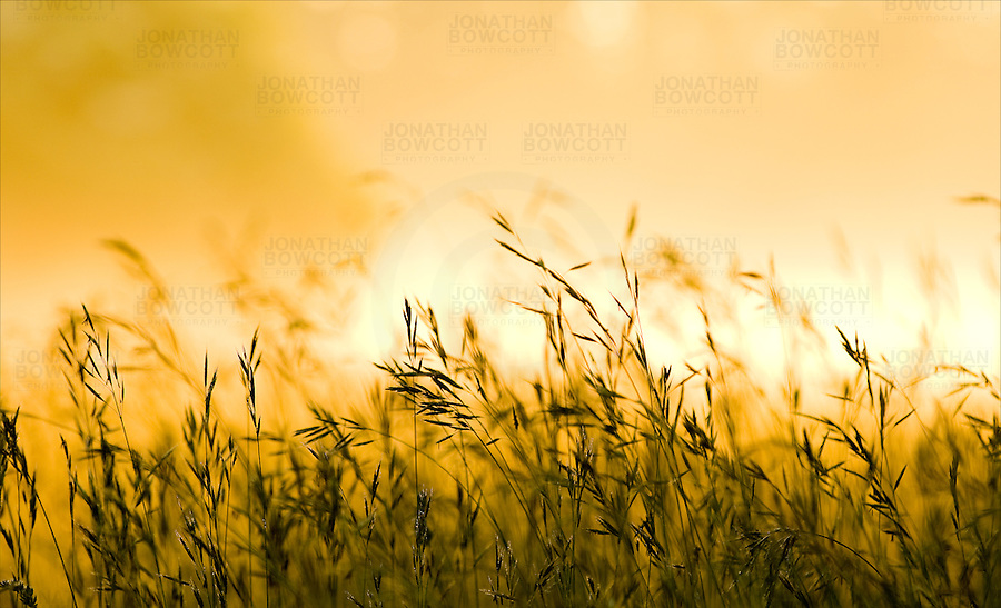 Sunrise on Clifton Downs, Bristol