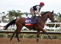 DEL MAR, CA - NOVEMBER 02: Rhododendron, owned by Mrs. John Magnier, Michael Tabor & Derrick Smith and trained by Aidan P. O'Brien, exercises in preparation for Breeders' Cup Filly & Mare Turf at Del Mar Thoroughbred Club on November 2, 2017 in Del Mar, California. (Photo by Jamey Price/Eclipse Sportswire/Breeders Cup)
