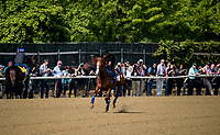 ELMONT, NY - JUNE 08: Justify with Humberto Gomez aboard gallops in front of throngs of media in preparation for the 150th Belmont Stakes at Belmont Park on June 08, 2018 in Elmont, New York. (Photo by Alex Evers/Eclipse Sportswire/Getty Images)