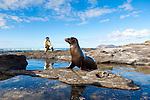 A juvenile sea lion posing for a photo op on Santiago Island in the Galapagos National Park, Galapagos, Ecuador, South America