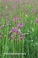 63863-01814 Prairie Blazing Stars (Liatris sp.) & Rattlesnake Master (Eryngium yuccifolium) Lee Co.   IL