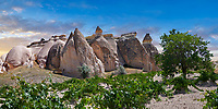 Pictures & images of vines growing near rock formations  near Goreme, Cappadocia, Nevsehir, Turkey