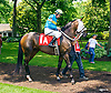 Miss Modela with Erin Rodjare aboard before The International Ladies Fegentri race at Delaware Park on 6/13/17