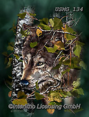Steven-Michael, REALISTIC ANIMALS, REALISTISCHE TIERE, ANIMALES REALISTICOS, paintings+++++,USMG134,#a#, EVERYDAY,wolf ,puzzle,puzzles