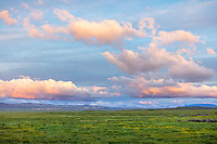 Carrizo Plain National Monument, CA: Colorful sunset clouds over spring green fields with yellow flowering goldfields
