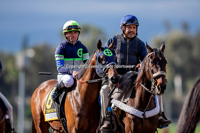 MAR 07: Storm the Court and Joel Rosario before the San Felipe Stakes at Santa Anita Park in Arcadia, California on March 7, 2020. Evers/Eclipse Sportswire/CSM