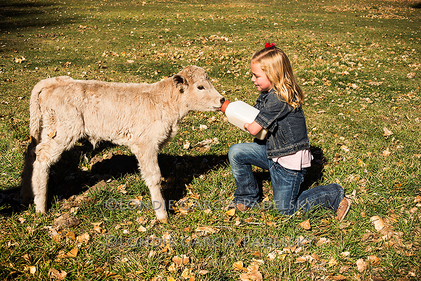 Jovi Dower bottle feeding the baby calf on the ranch. Dyer Nevada