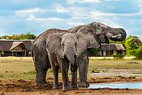 Elephant at a watering hole, Nxai Pan National Park, Botswana.