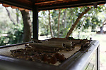 Bones that have recently surfaced sit atop a glass case containing bones and scraps of clothing of other Khmer Rouge victims at the Choeung Ek Genocidal Center near Phnom Penh, Cambodia. As many as 17,000 people are believed to be have been killed and buried at the site under the Khmer Rouge regime of 1975 to 1979. But the remains of 8,895 people have been recovered. Skulls, bones, teeth and scraps of clothing continue to be unearthed at the site, especially after heavy rains. March 1, 2012.