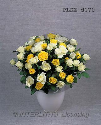 Jacek, FLOWERS, studio, photos, PLSE, PLSEd070,#F# Blumen, flores