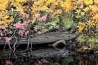 Infrared image from canal in Pocosin NWR near Pettigrew State Park, North Carolina